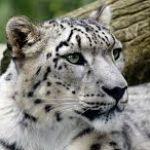 Zdjęcie profilowe olgakawa